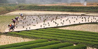 Farming Fields in Southern China